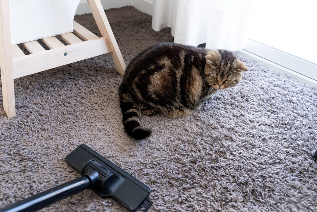 canister vacuum for pet hair